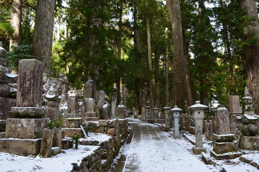 Snowy path through a cemetery, tall trees block the sky